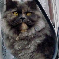 Кошка в окошке :: Олег Афанасьевич Сергеев