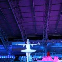 Балерина на арене. :: Наталья Золотых-Сибирская