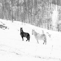 Чёрно - белый дресс код гор :: Татьяна Степанова