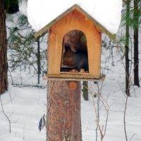 В ожидании свободного местечка в лесной столовой :: Наталья Пендюк Пендюк