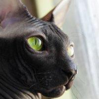 Тот же кот :: Марина Влади-на