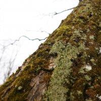 Дерево :: Алекс Патерсон