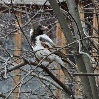 Белая ворона :: чудинова ольга