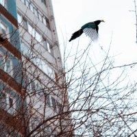 птица :: Ирина