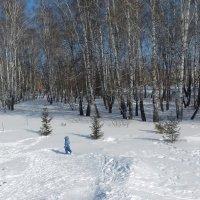 Прогулка в берёзовой роще . :: Мила Бовкун