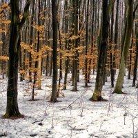 зимние листья... :: юрий иванов