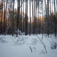 Our forest ... :: Елена НАЗМИЕВА