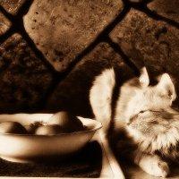 Кот и мандарины :: Екатерина Торганская