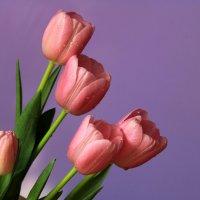 Весенний букет :: Ирина