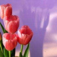 Тюльпаны :: Ирина
