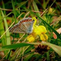 цветы крылатые и земные 2 :: Александр Прокудин