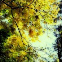 autumn pattern :: Бармалей ин юэй