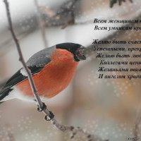 с 8 марта! :: Svetlana Galvez