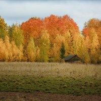"""""""Осень-красавица... С огненной россыпью рыжих прядей"""" © :: Александр Никитинский"""