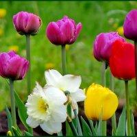 Цветы весны :: Светлана