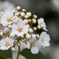 цветочки :: Виктория Комарова