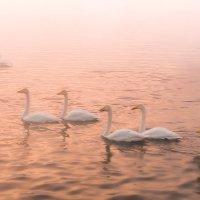 Рассвет на Лебедином озере :: Александр Поборчий