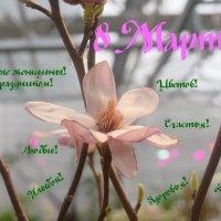 С ЖЕНСКИМ ДНЕМ! :: Татьяна Помогалова