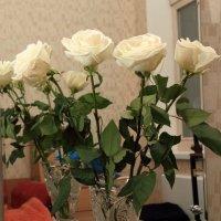 Белые розы :: Александр Rehc