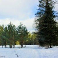 в лесу :: Сергей Кочнев