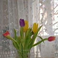 Тюльпаны к 8 марта! :: Михаил Столяров