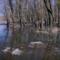 Весна. Разлилась речка широко, заливая деревА. :: Валентина ツ ღ✿ღ