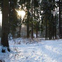 Солнце в лесу :: Александр Аксёнов