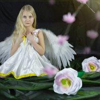 Ангелок 1 :: Сергей
