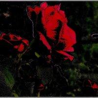 Красные розы :: Нина Корешкова