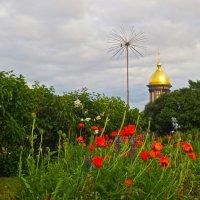 маки на Петроградской :: Елена