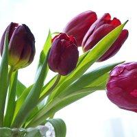 Весна :: ЕСЕНИЯ ♥