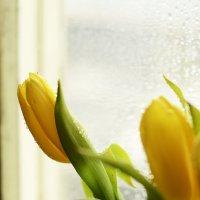 Весна) :: Julia Volkova