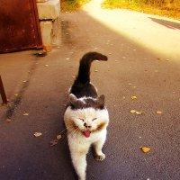 Харизматичный кот :: Canon PowerShot SX510 HS