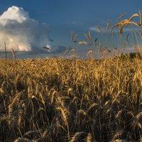 В поле :: Лариса Березуцкая