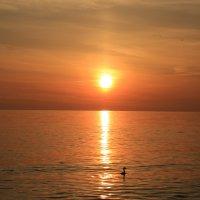 Весенний закат :: valeriy khlopunov