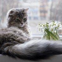 А за окном - весна и дождь :: Ирина Приходько