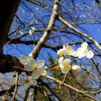 Сочинская весна :: Антонина Владимировна Завальнюк
