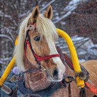 конь :: Павел Кузнецов