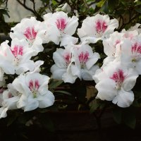 Весеннее цветение :: Aнна Зарубина