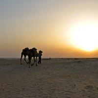 Вечер в Сахаре :: максим лыков