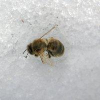 Замерзла (((( :: Марина Ломина