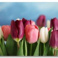 8-мартовские тюльпаны. :: Elena Klimova