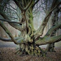 Фантазии в деревьях :: spm62 Baiakhcheva Svetlana
