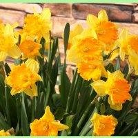 Весна  в желтом! :: Алексей Дмитриев