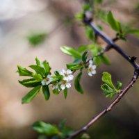 Весны приметы... :: Виолетта