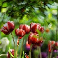 Весна пришла :: Ксения Базарова