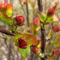 Когда цветут деревья... :: Ирина Румянцева