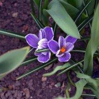 first flower :: Levon Minasyan