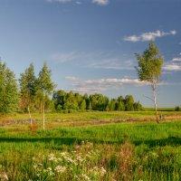 Солнечная поляна :: Александр Березуцкий (nevant60)