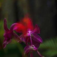Африканский,ботанический сад. :: Валентина Потулова